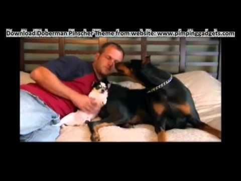 Dogs 101 - Doberman Pinscher + EXCLUSIVE  Windows 7 Theme Link