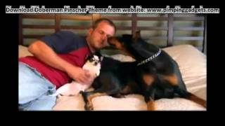 Dogs 101 - Doberman Pinscher + Exclusive  Windows 7 Theme Link