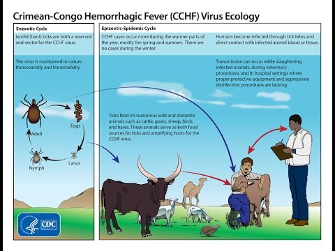 Crimean-Congo Hemorrhagic Fever: An interview with Dr Judy Stone