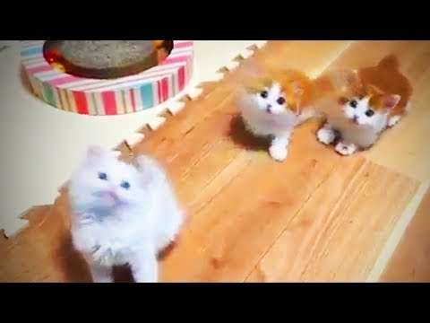 Funny Dogs  🐶 😍 Cute Dogs Being Funny (Part 2) [Funny Pets]
