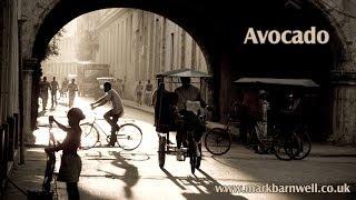Latin / Salsa Spanish Guitar Music - Avocado (Mark Barnwell)
