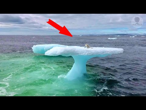 Fishermen thought it was a seal on an iceberg but they were shocked to realise who it actually was…