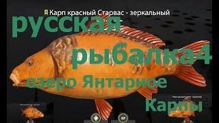 Русская рыбалка 4 оз Янтарное фарм старвасы опять карпы russian fishing