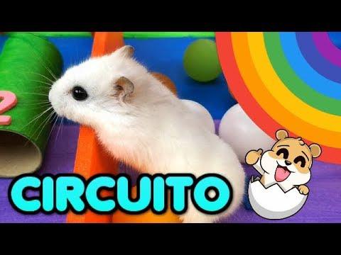 Nuestros HAMSTERS juegan en el CIRCUITO Arcoiris - Eres genial con Eva y Lina
