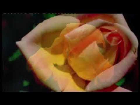 Al'amarin So Video Song   Nura M. Inuwa