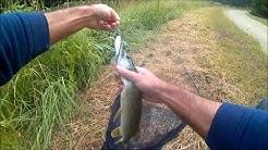 Pêche du carnassier Canal de l'Ourcq (Mareuil), des brochets bien voraces!!!!
