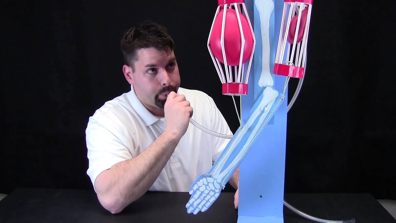 Muscles Moving Your Bones Youtube