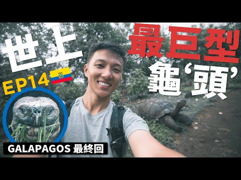 """[EP14]尋找地球上最巨型龜""""頭""""😏