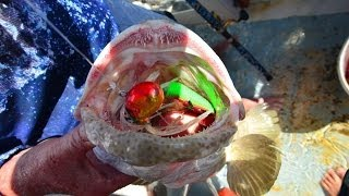 Max Pimped up Octo Jigs!!  Awesome Jigging!! Thumbnail