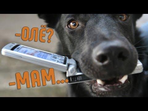 Вопрос: Как научиться разговаривать с собакой?