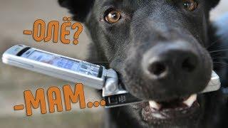 Как научить СОБАКУ говорить МАМА? | Собака говорит МАМА