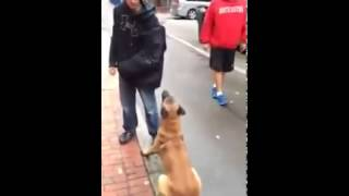 Unbelievably Well Trained Dog! Funny