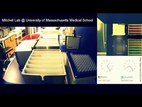 Mitchell lab  - demo robotic evolution platform (part 1)