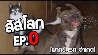 สัสโลก ep 0  พากย์นรก ฮาเกต Pet Talk อัพให้ใหม่