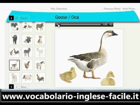 vocabolario inglese: