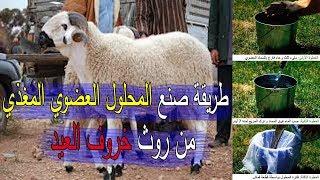 طريقة صنع المحلول العضوي المغذي من روث خروف العيد