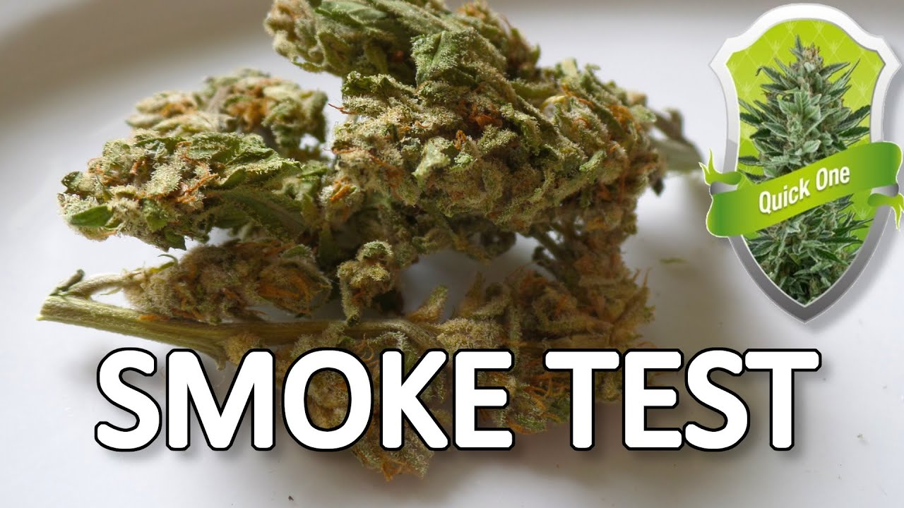 Download Quick One RQS Smoke Test