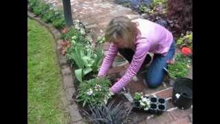 MVI_pathway planting.avi