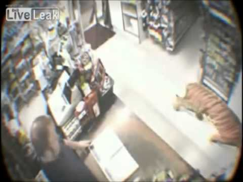 Thumbnail: Tiger enters store and scares everyone