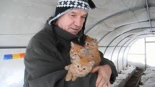 Выживут ли рыжие котята на морозе