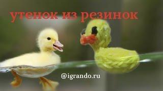 Как сплести фигурку УТЁНКА из резинок видео урок | Rainbow Loom Duck video