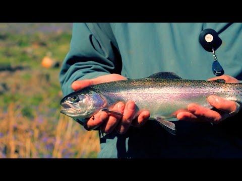Wild Fishing on Dartmoor
