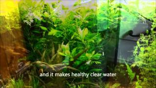 BEST Eheim Filter EVER?? - The 2227 Wet and Dry Canister Filter