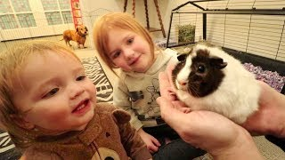 WE GOT ONE!!  Meet our new PET GUINEA PIG! First day home routine with Adley & Baby Niko! (Surprise)