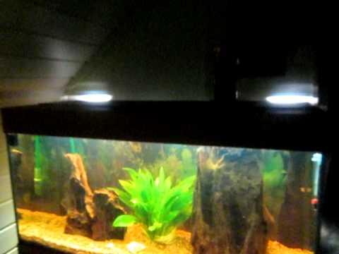 4ft 200 litre malawi mbuna cichlid setup doovi for Aquarium 200 litres