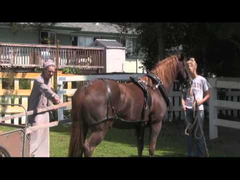 UCS 29.7 Horse Forecart Pulling Part 4