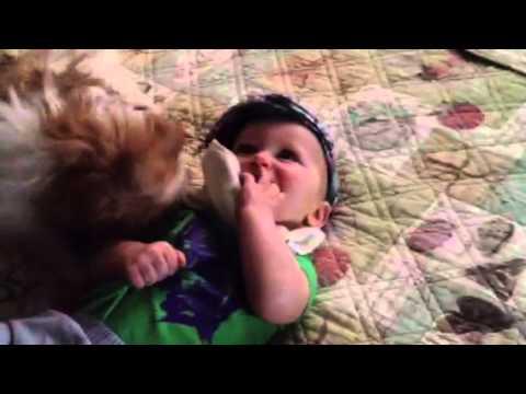 Shih Tzu Attacks Baby Oh My Youtube