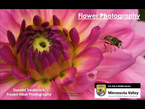 wildlife-photography-webinar-series:-photographing-flowers