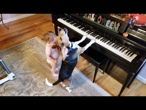 GOOGLE'S YEAR IN SEARCH 2018 Piano Dog and baby