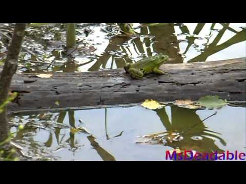 Frogs Eating Fish