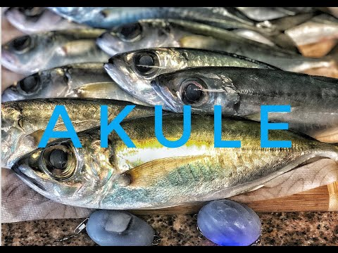 AMAZING Simple Akule (big Eye Scad) Recipe. With Fishing Footage!