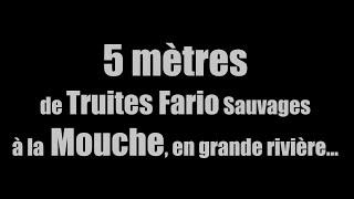 5 mètres de Truites Fario sauvages à la Mouche Sèche en grande rivière