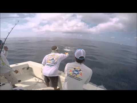 2016 Offshore World Championship   New Orleans Invitational Bilfish Tournament   Pacific Sailfish
