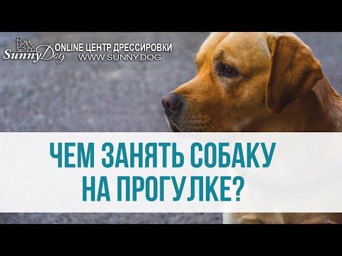 чем занять собаку в квартире кредит онлайн 5000 грн