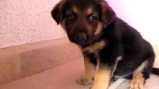 Ramiro Zacarias Cachorro Maximus 3