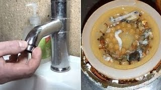 Surprisingly Gross Things You Need to Clean, Life Hacks  !