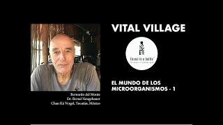 Vital Village | Dr. Bernd Neugebauer:  MICROORGANISMOS 1
