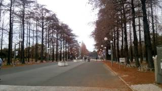 花博記念公園鶴見緑地 turumiryokuti