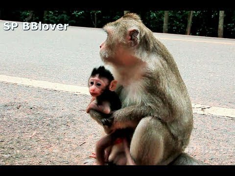 Psycho Monkey Steal Baby From Real Mom Sumara - Amara 34