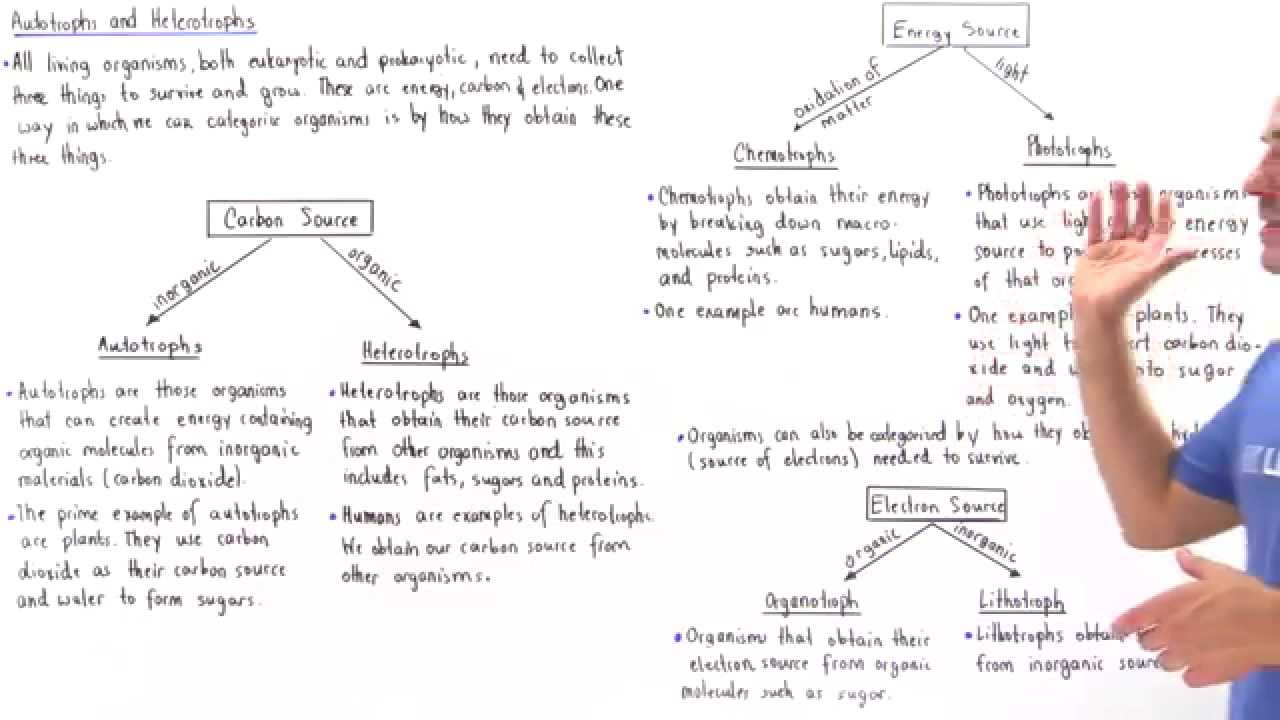 Autotrophs and Heterotrophs - YouTube