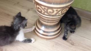 Спасенные котята подрастают и радуются жизни.