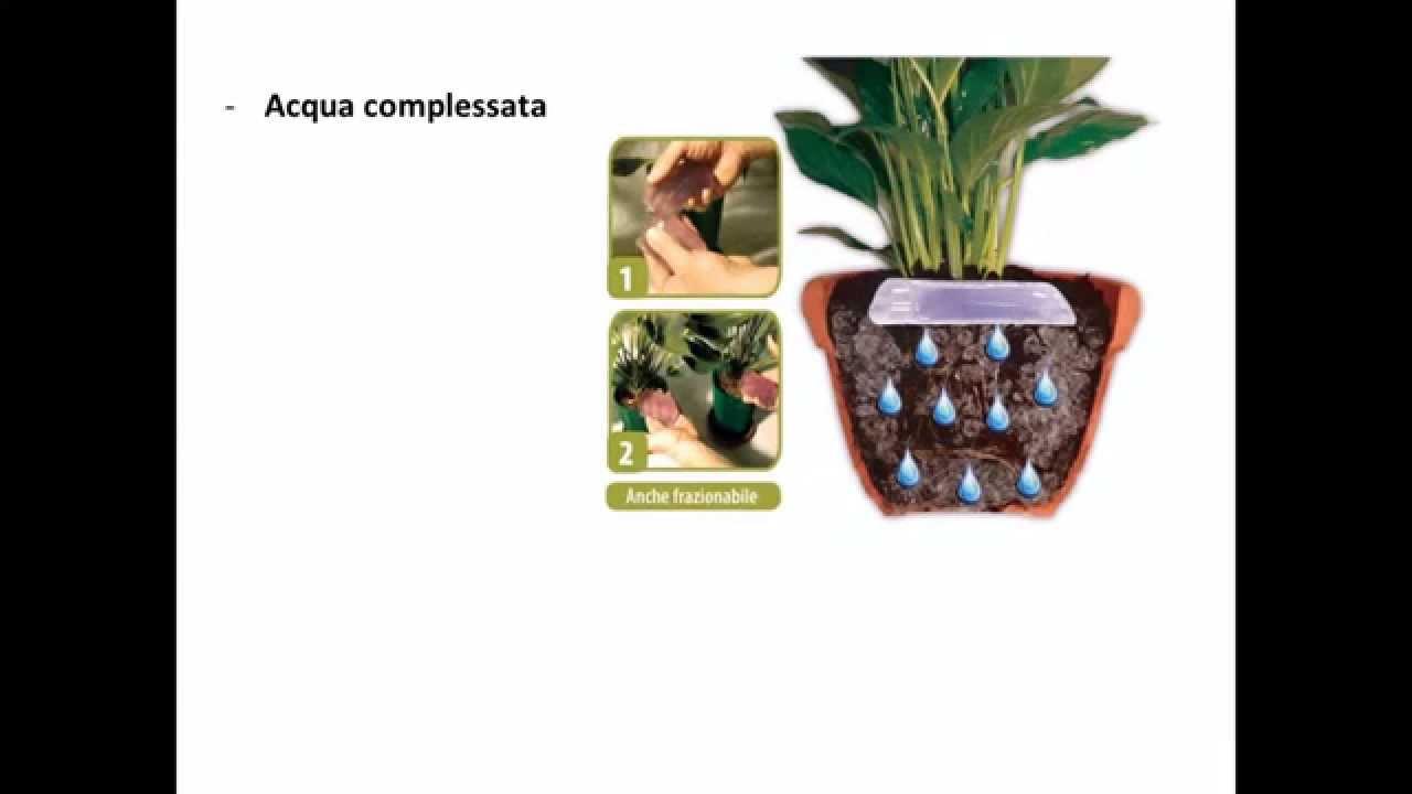 Annaffiare le piante da appartamento in vacanza Corso di