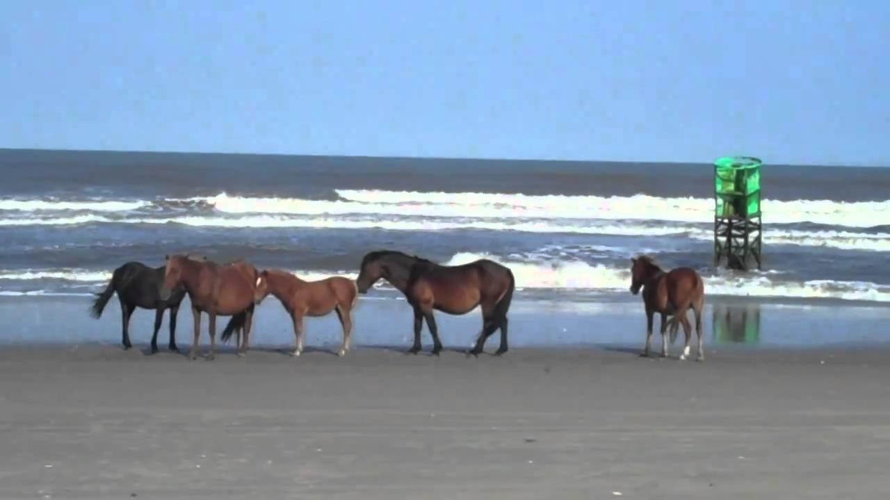 Corolla Wild Horses On Beach Jeep Tours