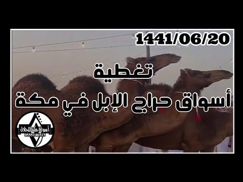 تغطية أسواق الإبل 1441 06 20 هـ Youtube