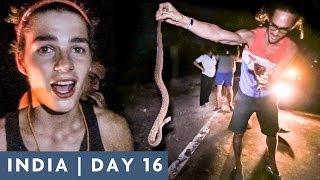 jack kills a snake   day 16 india adventure