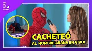 Video Se vengó y cacheteó al hombre araña por mentiroso (Sexy woman, Milena Zárate, slaps Spiderman) download MP3, 3GP, MP4, WEBM, AVI, FLV Oktober 2018